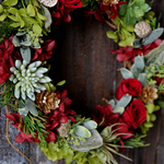 Christmas Wreath (botanical)