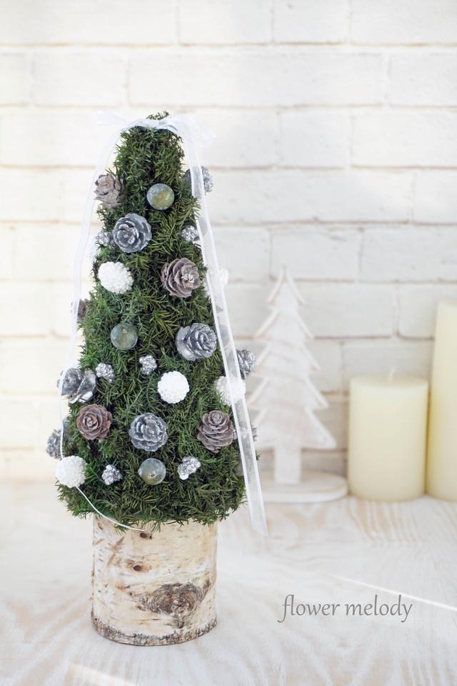 白樺とヒムロスギのクリスマスツリー