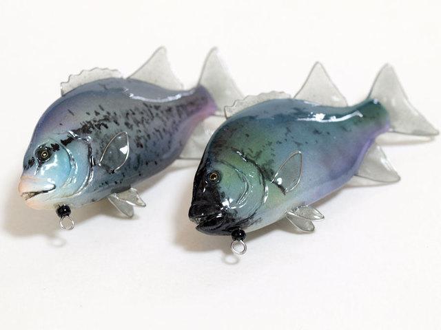 オーダー品:石鯛(クチジロと老成魚)