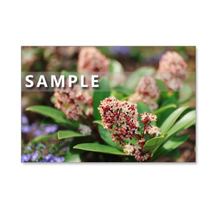 131)Postcard 5枚組 春の草花と春の木の花