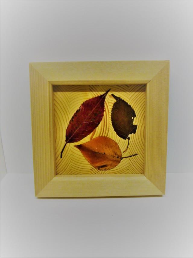 押し葉アート ?「秋の贈り物」