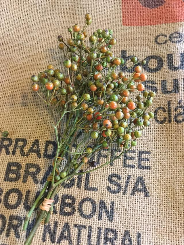 野バラの実枝付き、グリーンからオレンジ
