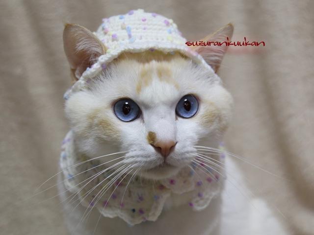 【犬猫用】ウインター帽子とケープセッ...