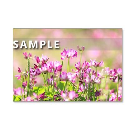 1037)セット 5枚選べるポストカード  「懐かしく、清楚な野原の花たち」