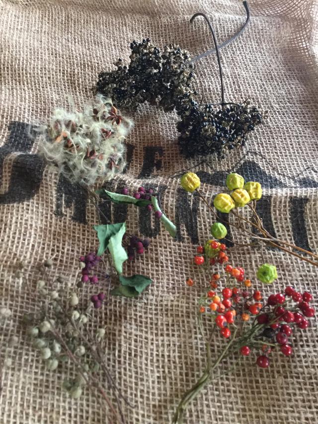 お得な木の実、花の実、種子セット