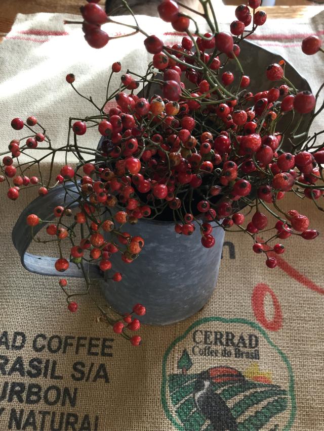 今季残りわずか野バラの実枝付き、40本以上