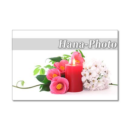 1279) 美しい椿たち     ポストカード5...