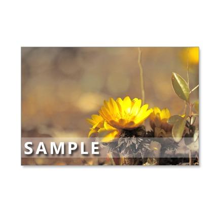 138)Postcard 5枚組 可憐な早春の花たち