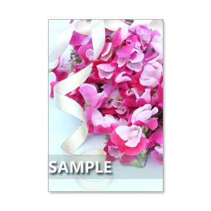 1042)Postcard 5枚組 春のキュートな花たち