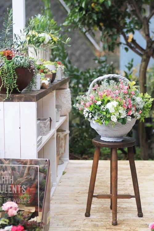 """季節の花寄せ植え 初恋草""""さくら""""とバラ咲きジュリアンのハイジ鉢寄せ植え"""