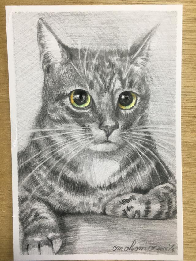 鉛筆画ポストカードサイズ(猫)目のみカラー1点物