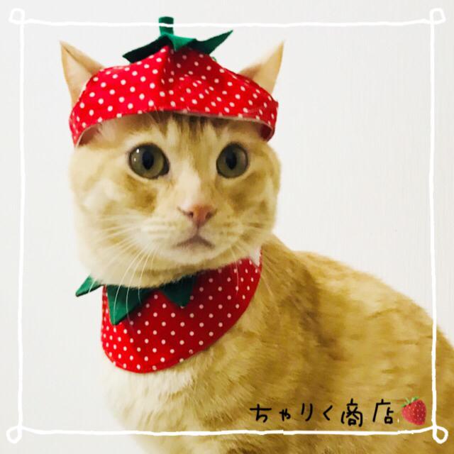 送料無料☆彡なりきり苺♡いちごのコスプレ風〜猫の首輪