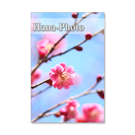 1035)セット 5枚選べるポストカード 梅、花桃、桜 春の花勢ぞろい
