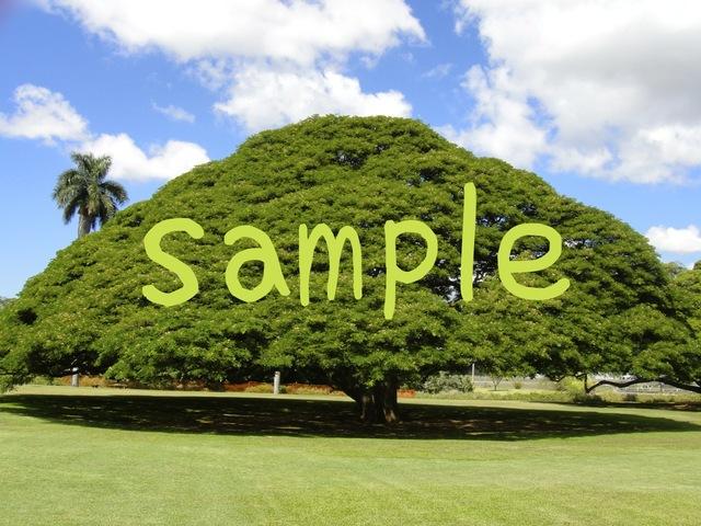 ハワイ:モアナルア・ガーデンズの大きな木