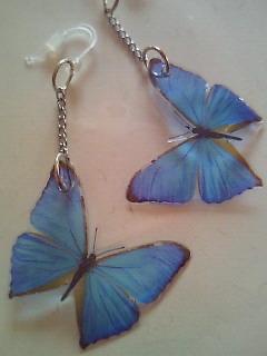 モルフオ蝶のピアス