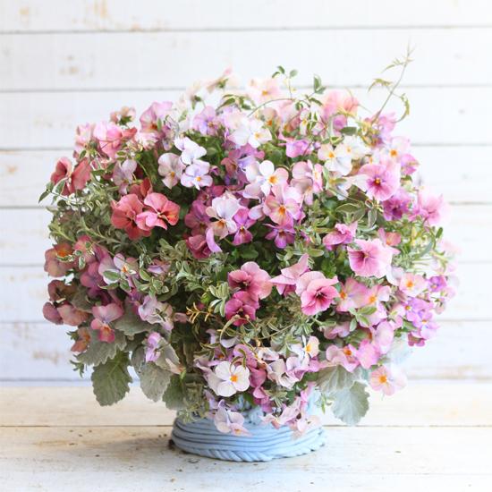 【1点もの】季節の花のウォールバスケット パンジーの華やか寄せ植え