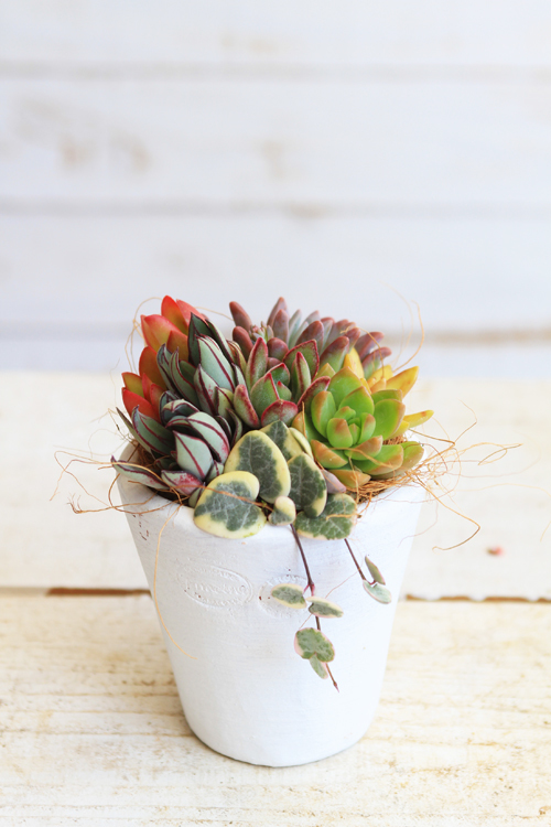白マットな鉢の多肉植物寄せ植え