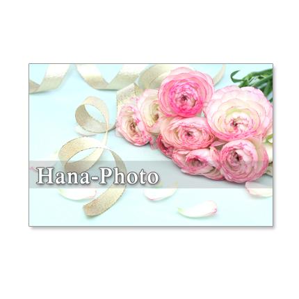 151)Postcard 5枚組 春を感じる花たち