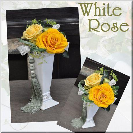 �ץꥶ���֥ɥ����white rose��(yellow)������̵����