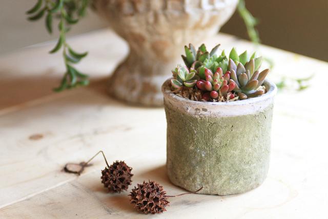 【NEW】自分で作る多肉植物寄せ植えキット