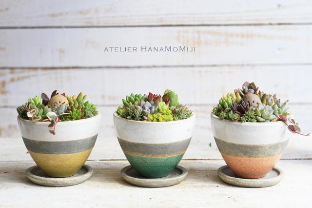 しましま陶器の多肉植物寄せ植え【しましまイエロー】