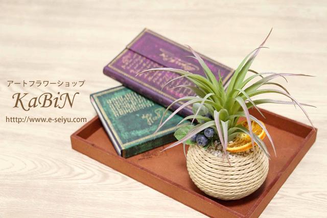 【再販】多肉植物グリーンインテリア ベリー・オレンジミックス