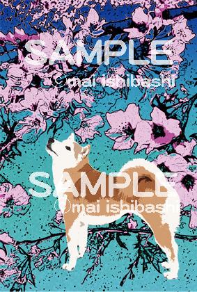 柴犬と桜/イラストポストカード同柄2枚組