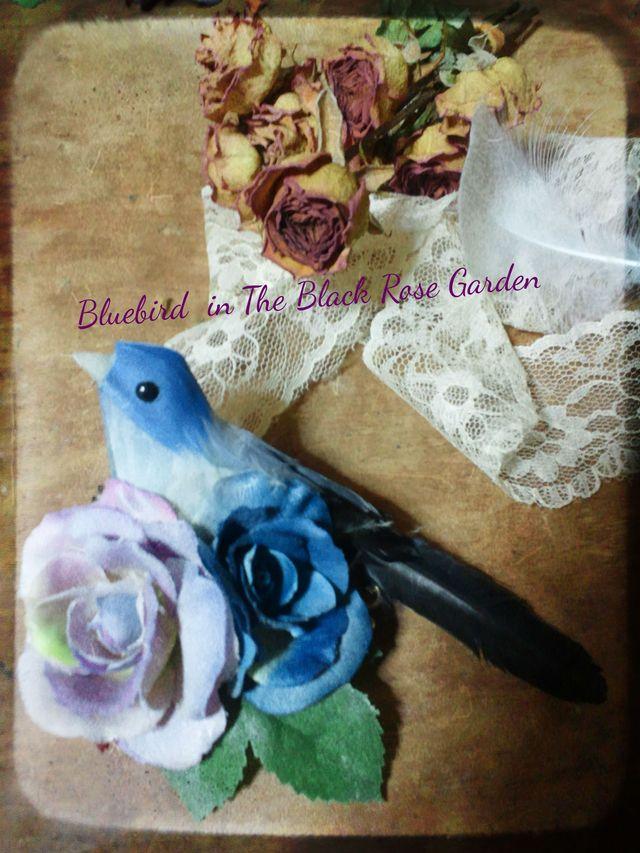 Bulebird in The Black Rose Garden�֥?��
