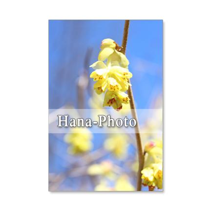 157)Postcard 5枚組 青空と・・・・シンプルに・・・・