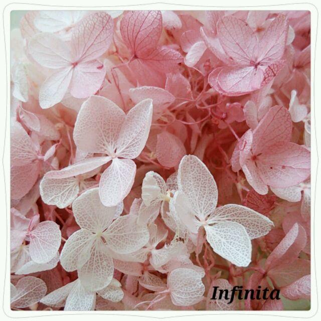再・・々販☆送料込み♪ドライフラワー紫陽花(アジサイ)☆ピンク&ホワイトマーブル
