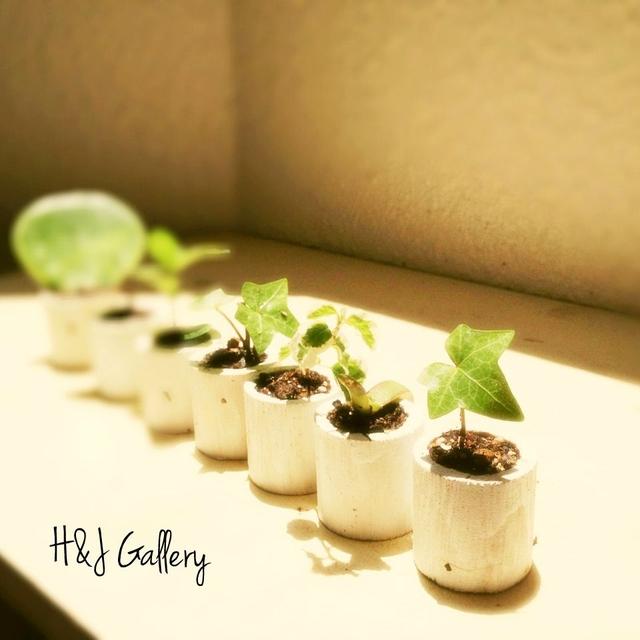 ☆小さな小さなちーさな植木鉢*丸型白