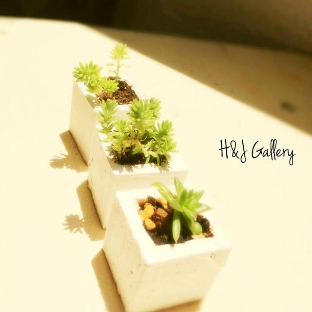 ☆小さな小さなちーさな植木鉢*角型白