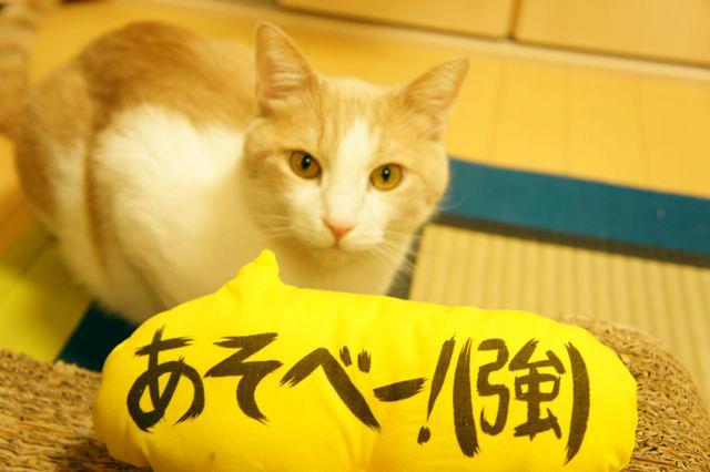 吹き出し猫キッカー ラージ(あそべー!)