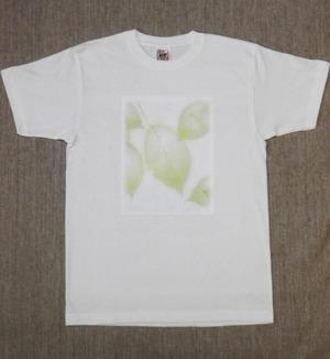 レディースTシャツ・Lサイズ 『新緑』