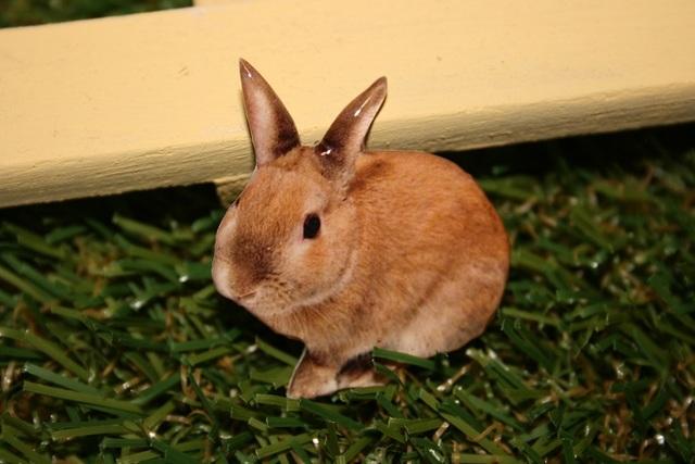 ウサギ★ブローチ