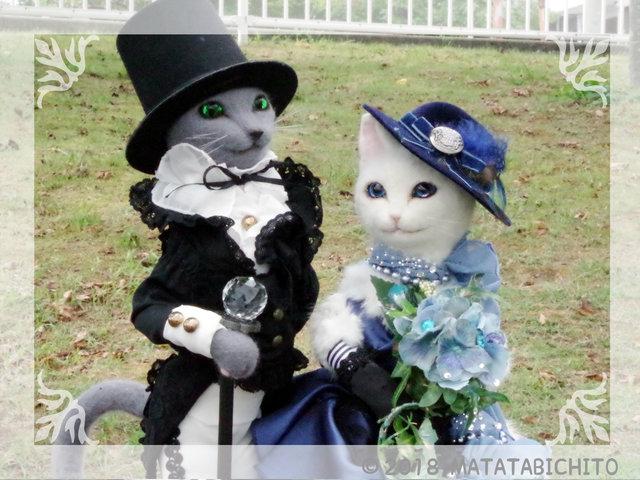 【CAT】伯爵と貴婦人