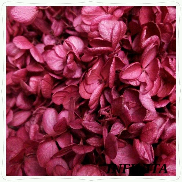 再販☆送料込み♪ドライフラワー紫陽花(アジサイ)☆フレンチピンク