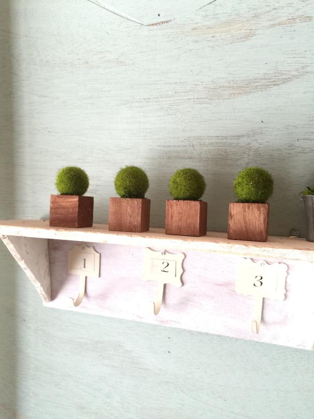 ☆小さな植木鉢*藻 茶