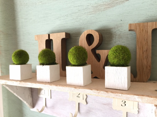☆小さな植木鉢*藻 白