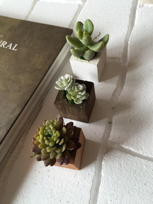 ☆小さな植木鉢 多肉3種セット