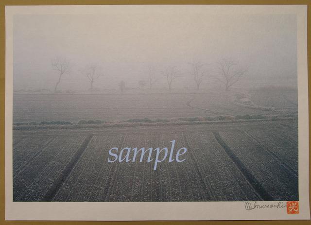 プリント朝霧と畔木 小さな麦