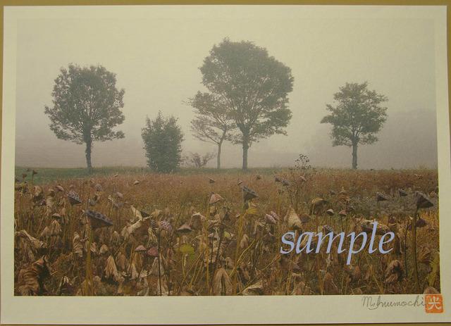プリント朝霧と畔木 枯蓮
