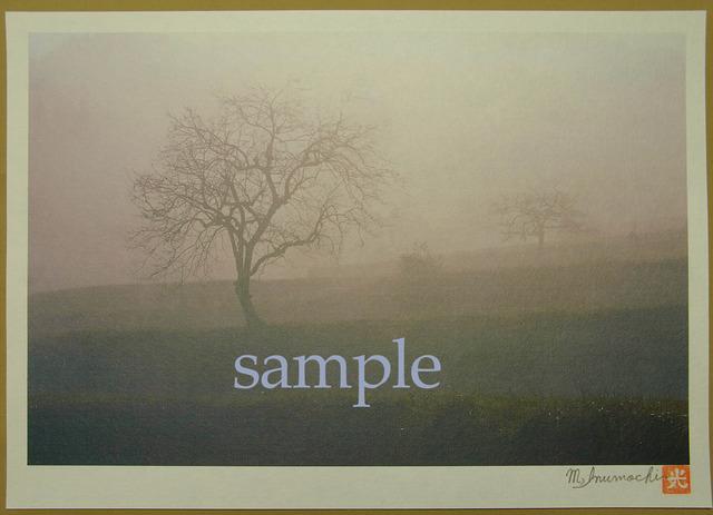 プリント朝霧と畔木シリーズ 柿木