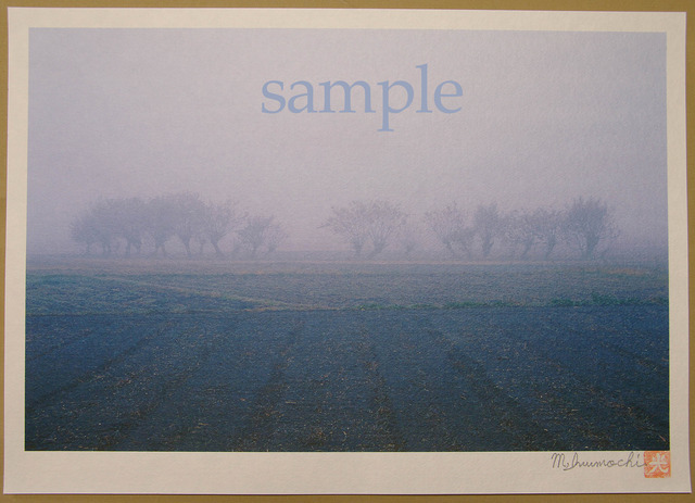 朝霧と畔木シリーズ 広がり