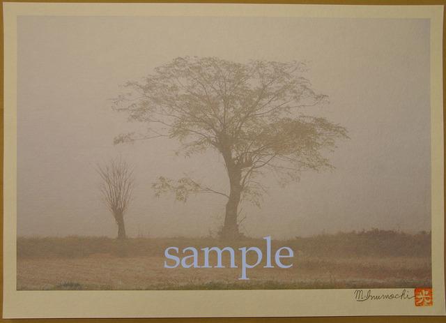 プリント朝霧と畔木シリーズ 兄妹