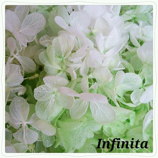 再販×9☆送料込み♪ドライフラワー紫陽花(アジサイ)☆グリーン&ホワイト マーブル