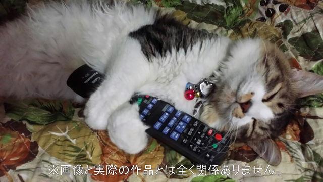 『amazonesu0120様 予約品』 愛猫集パ...