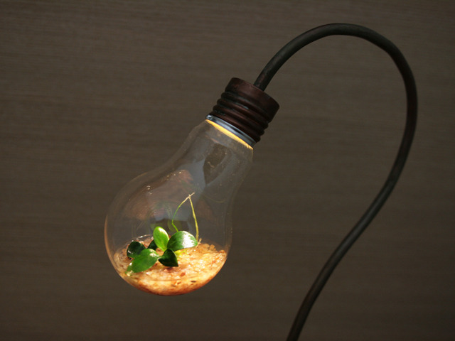 [pakari様お問い合わせ分] bulb terrarium
