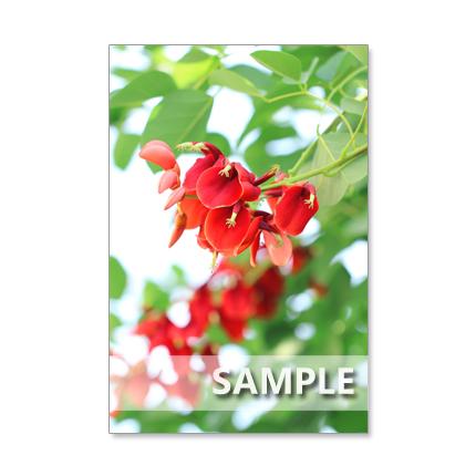★1144) 夏の花  ポストカード5枚組  再販1