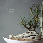 plants born (crocodile) ゴッドレベイ